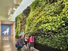 کاربرد دیوار سبز در مدارس